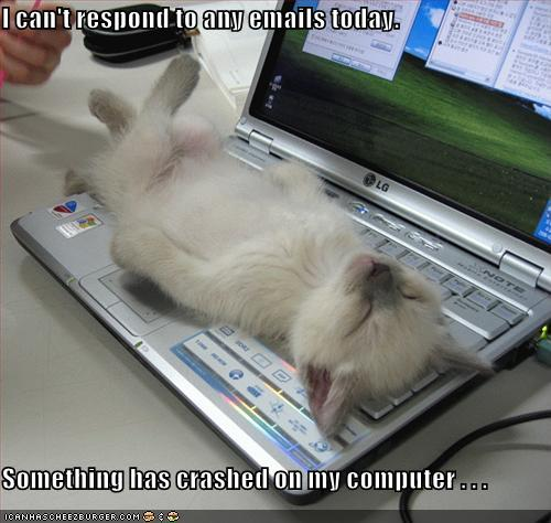 https://kimolsen.files.wordpress.com/2008/01/funny-pictures-kitten-crashed-laptop.jpg?w=560
