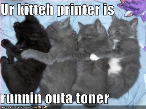 funny-pictures-kitten-printer.jpg